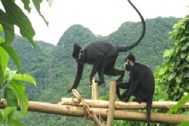 Fauna National Park Phong Nha - Ke Bang